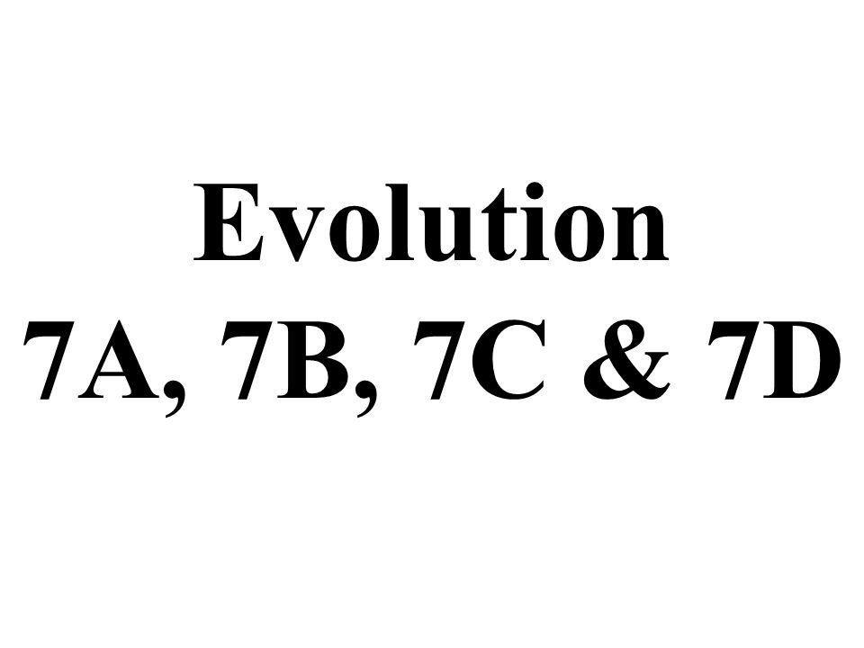 Evolution 7A, 7B, 7C & 7D