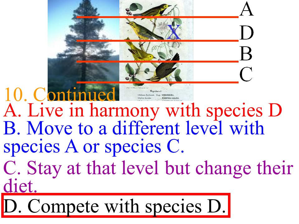 10. Continued A. Live in harmony with species D. B. Move to a different level with species A or species C.
