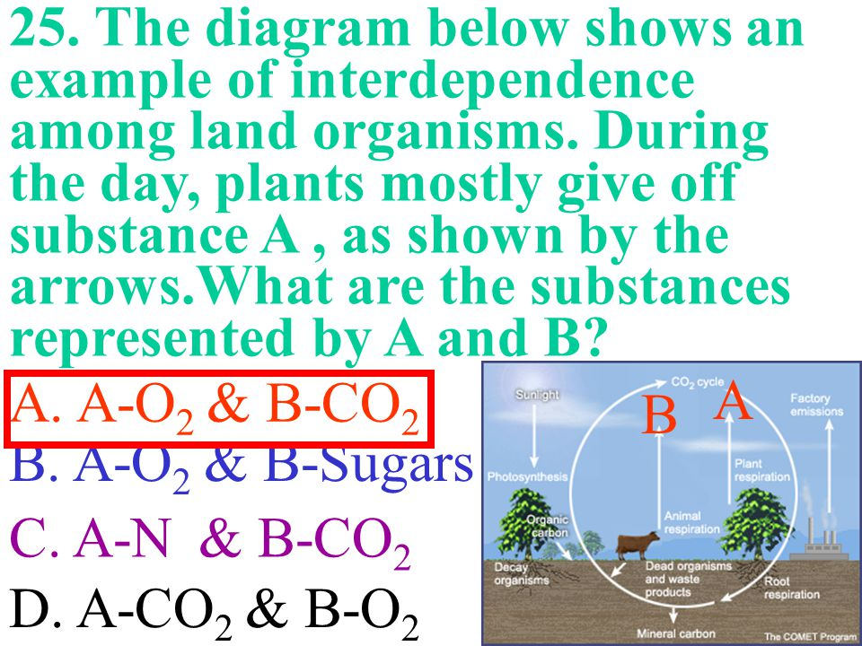 25. The diagram below shows an example of interdependence among land organisms. During the day, plants mostly give off substance A , as shown by the arrows.What are the substances represented by A and B