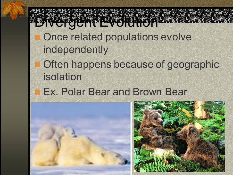 Divergent Evolution Once related populations evolve independently