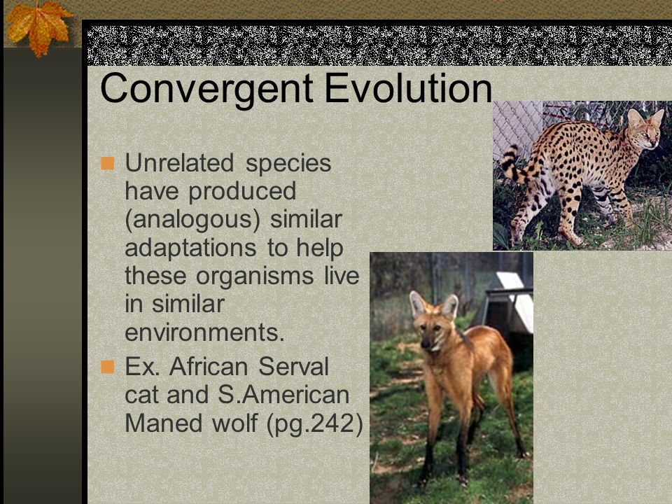 Convergent Evolution Unrelated species have produced (analogous) similar adaptations to help these organisms live in similar environments.