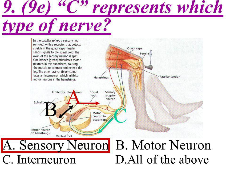 A B C 9. (9e) C represents which type of nerve