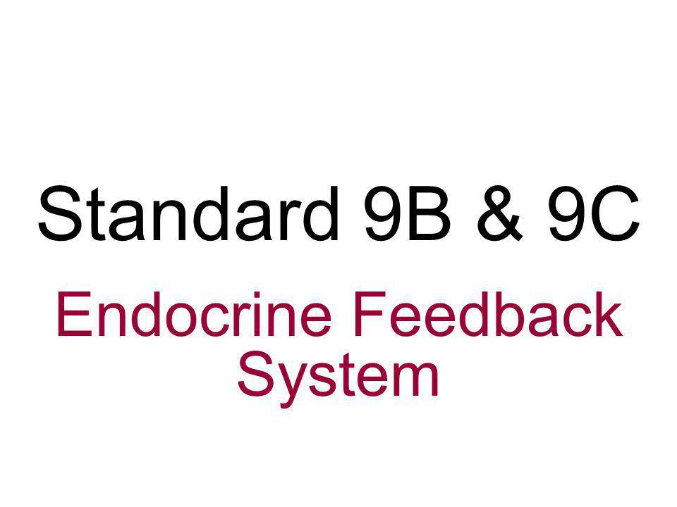 Endocrine Feedback System