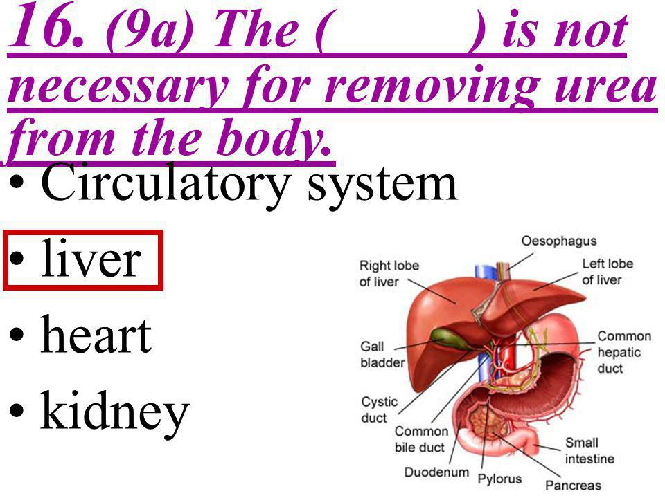 16. (9a) The ( ) is not necessary for removing urea from the body.