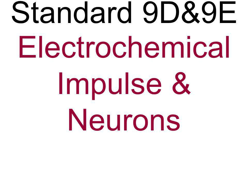 Electrochemical Impulse & Neurons