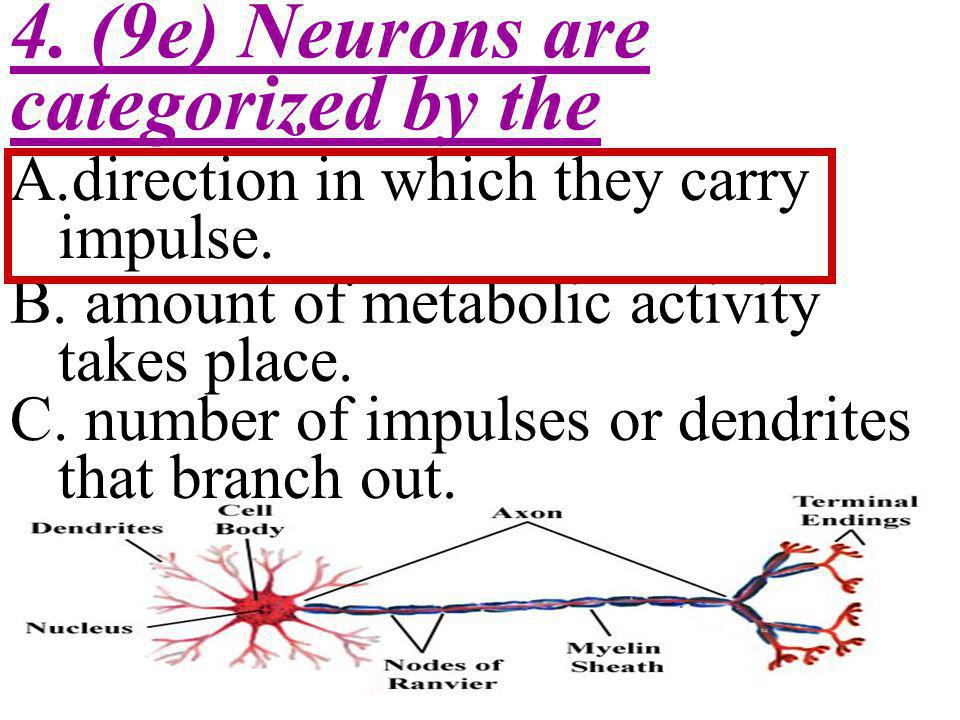 4. (9e) Neurons are categorized by the
