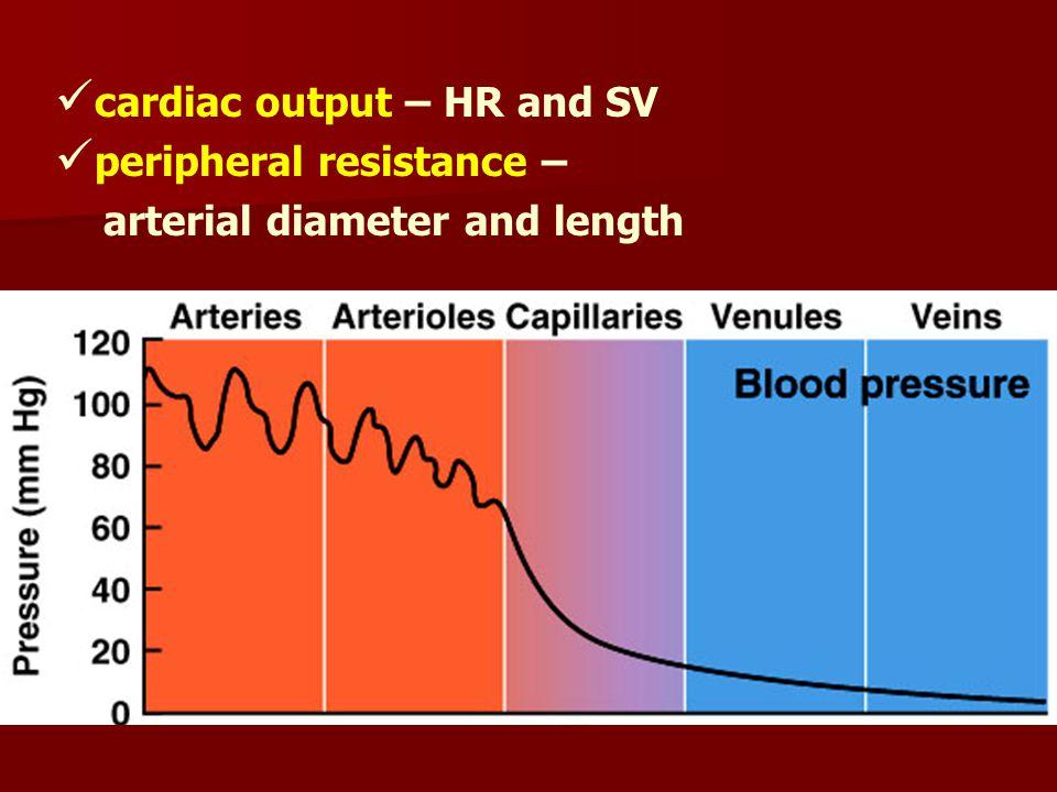 cardiac output – HR and SV