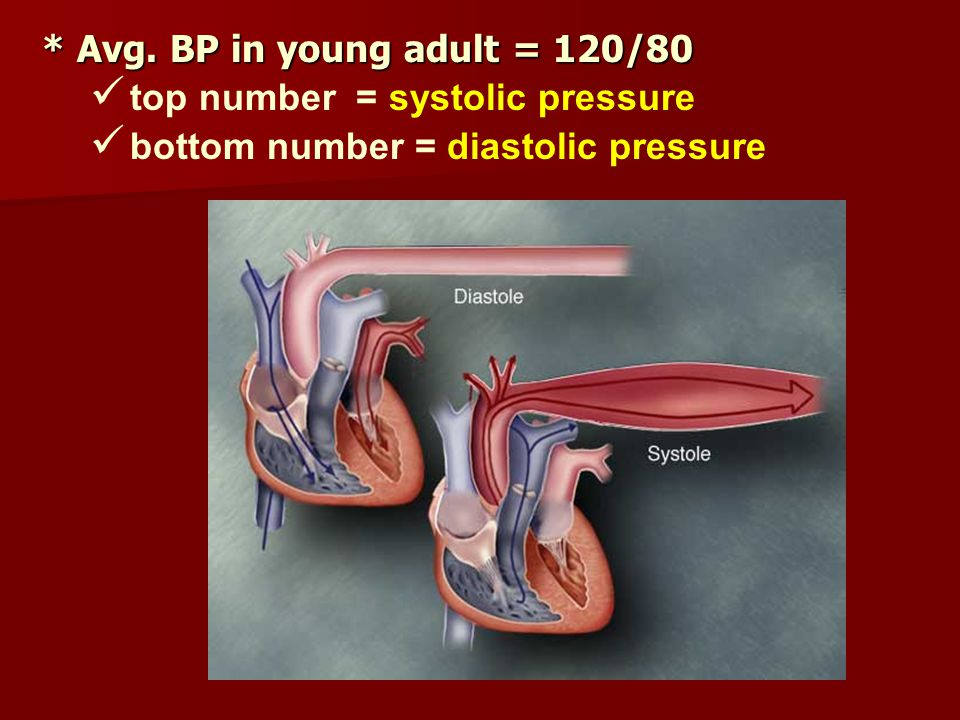 * Avg. BP in young adult = 120/80