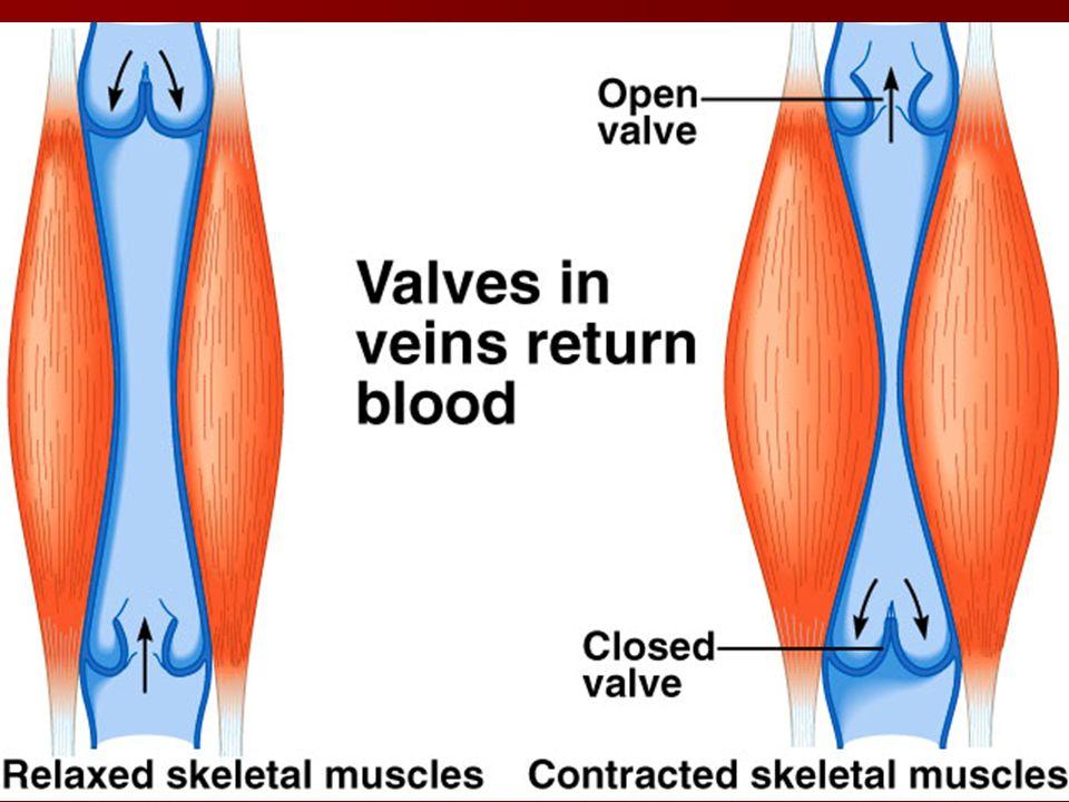 Blood in veins is under low pressure