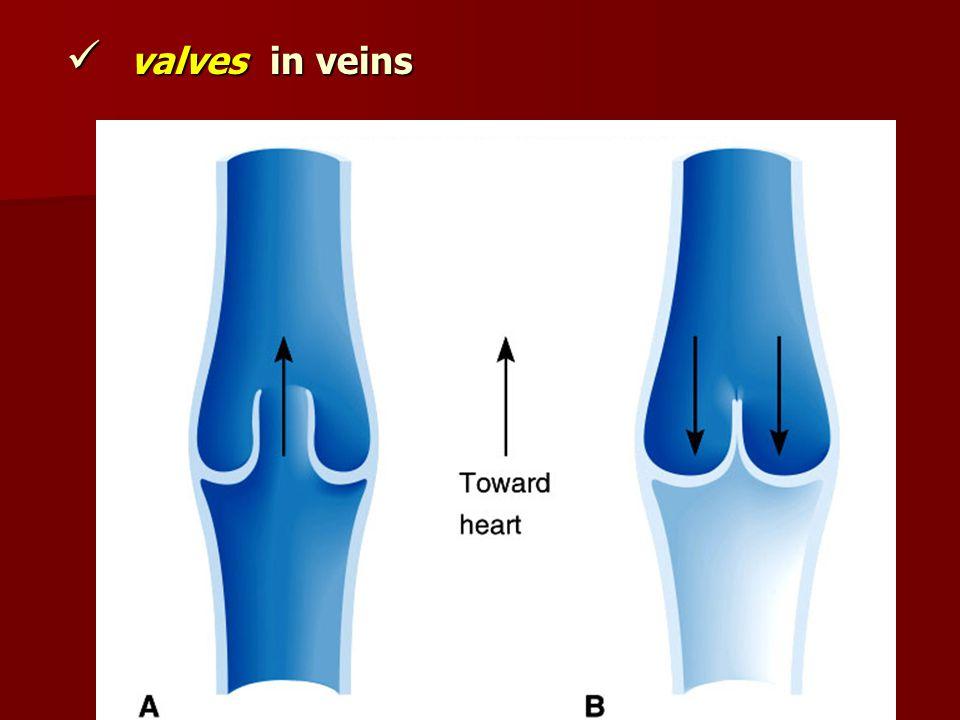 valves in veins