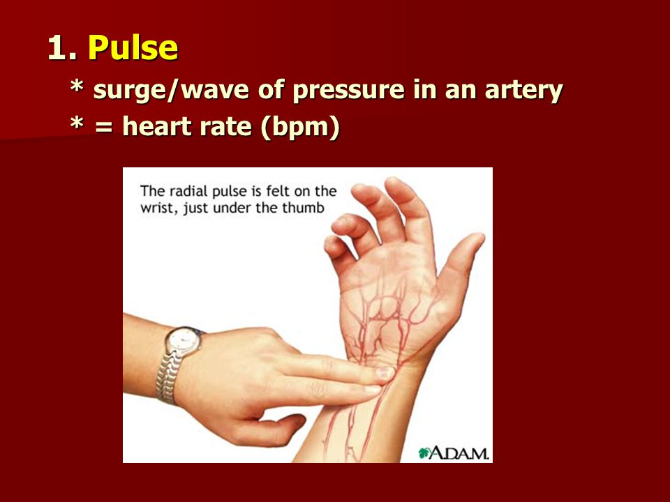 1. Pulse * surge/wave of pressure in an artery * = heart rate (bpm)