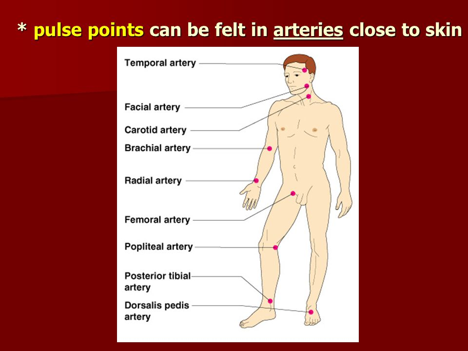* pulse points can be felt in arteries close to skin