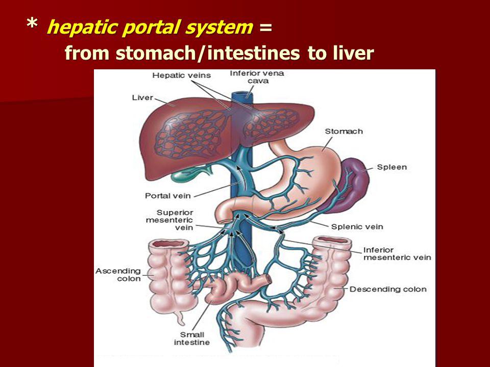 * hepatic portal system =