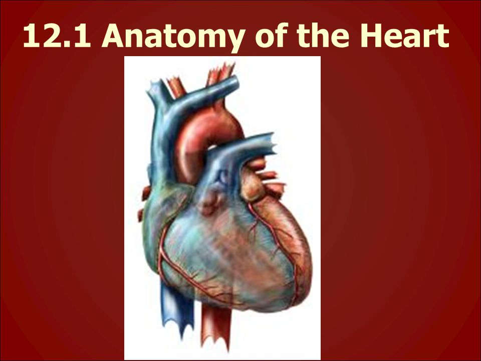 12.1 Anatomy of the Heart