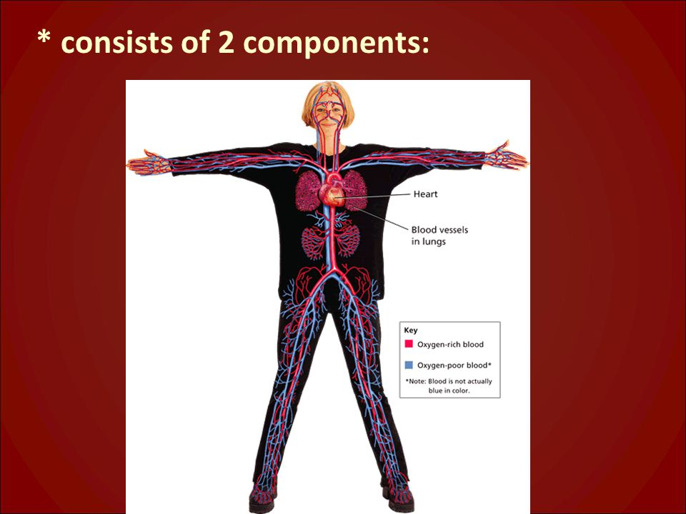 * consists of 2 components: