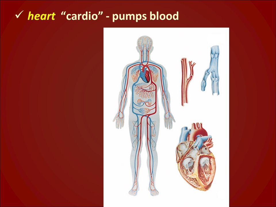 heart cardio - pumps blood