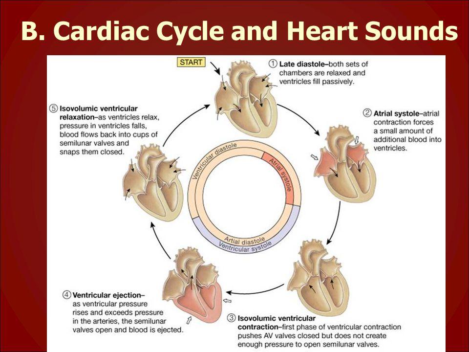 B. Cardiac Cycle and Heart Sounds