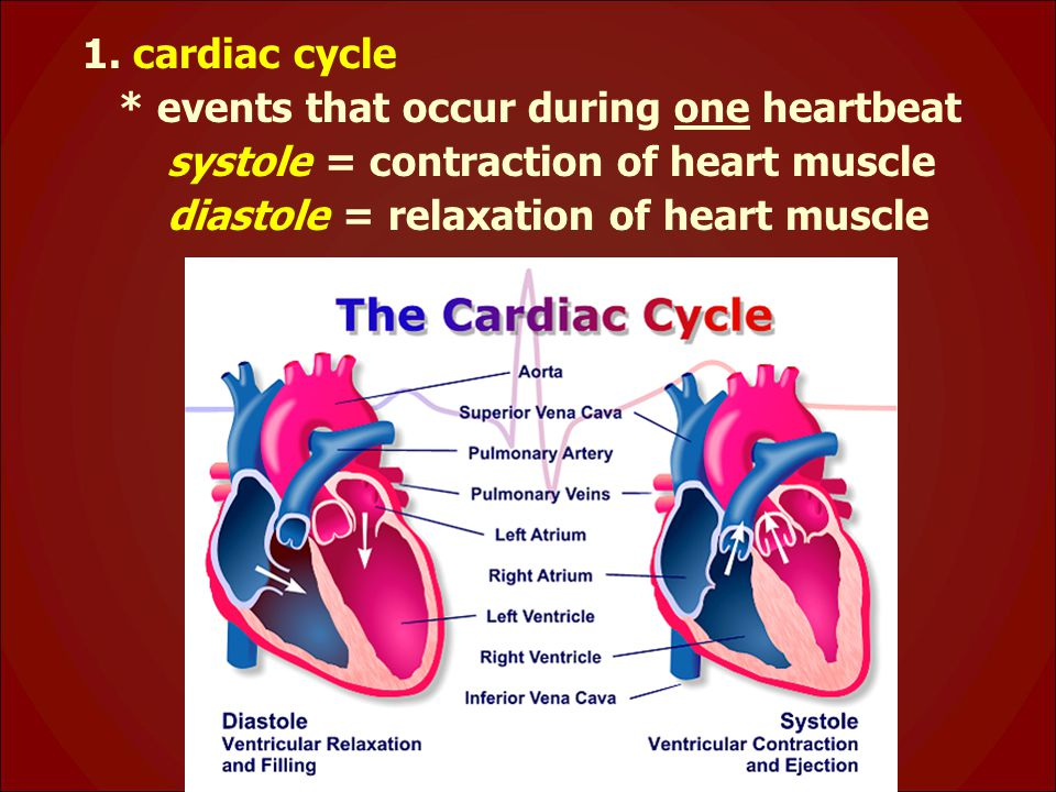 1. cardiac cycle * events that occur during one heartbeat.