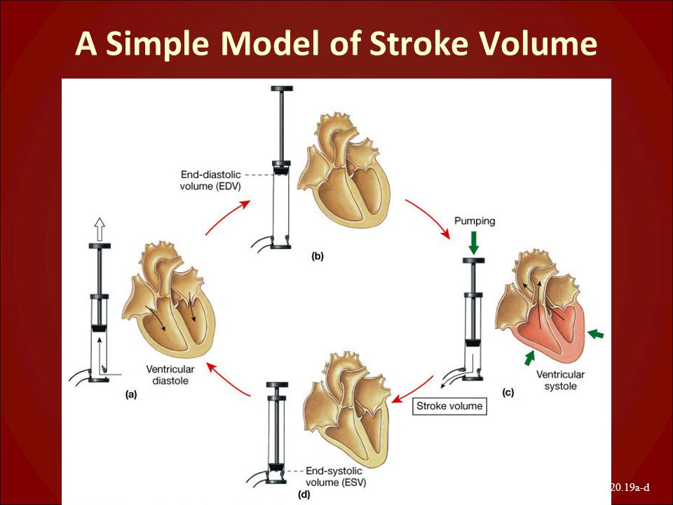 A Simple Model of Stroke Volume