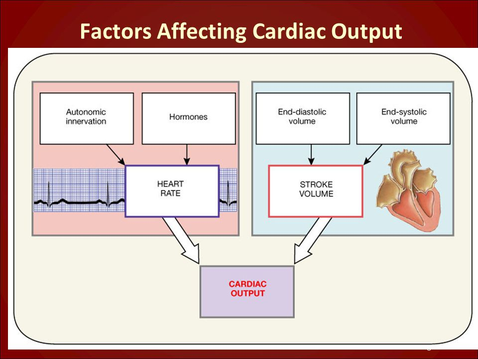Factors Affecting Cardiac Output