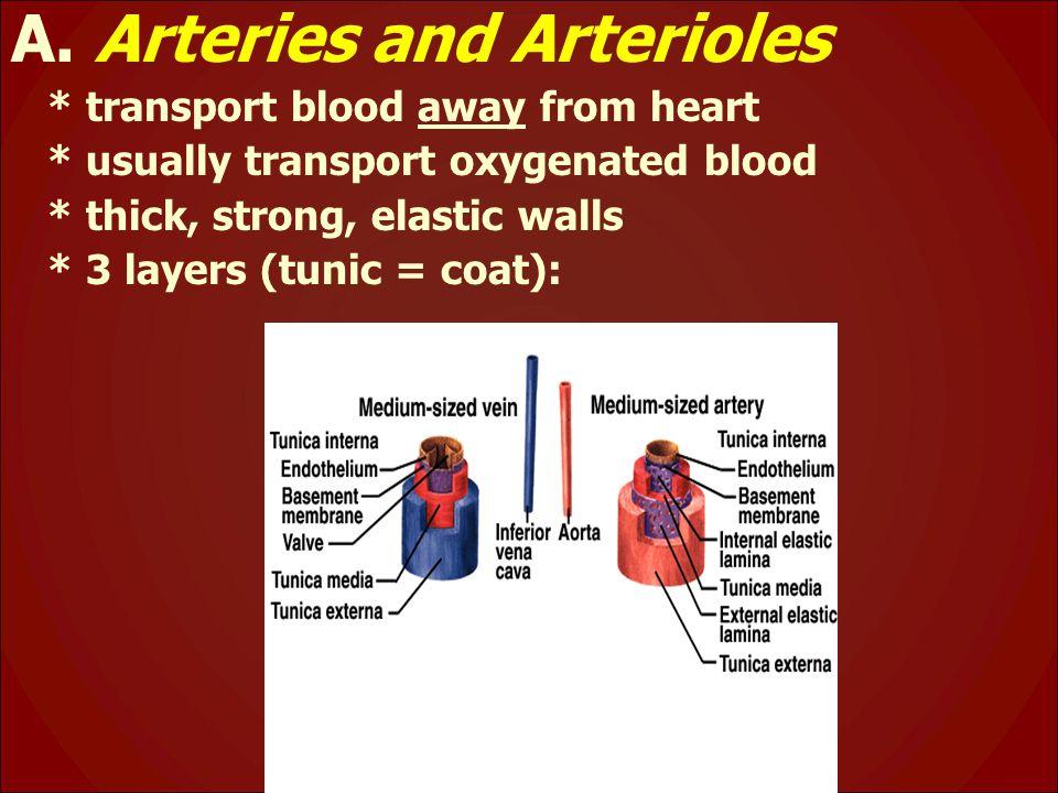 A. Arteries and Arterioles