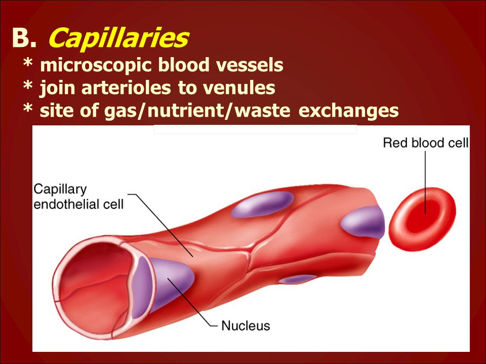 B. Capillaries * microscopic blood vessels