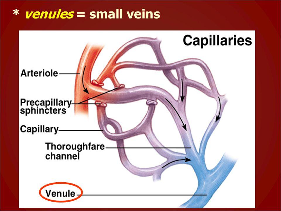 * venules = small veins