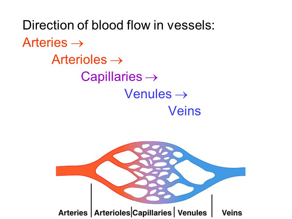 Direction of blood flow in vessels: