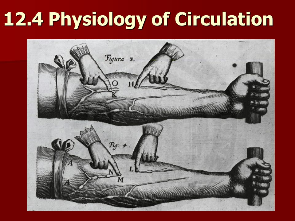 12.4 Physiology of Circulation