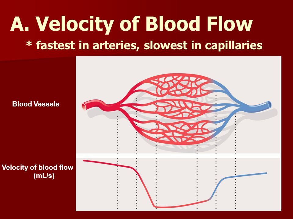 A. Velocity of Blood Flow