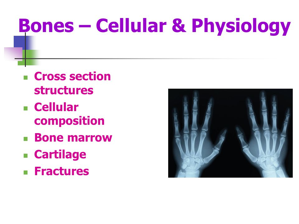Bones – Cellular & Physiology