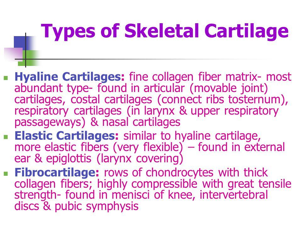Types of Skeletal Cartilage