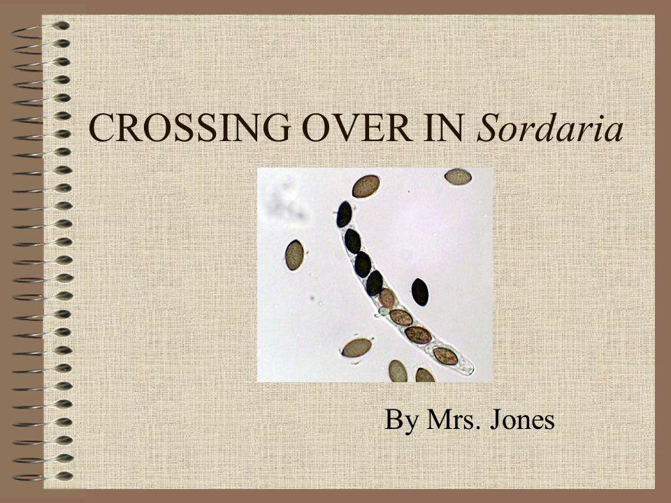 CROSSING OVER IN Sordaria
