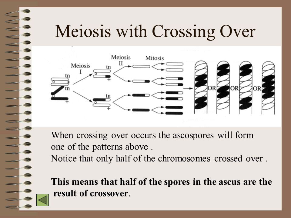 Meiosis with Crossing Over
