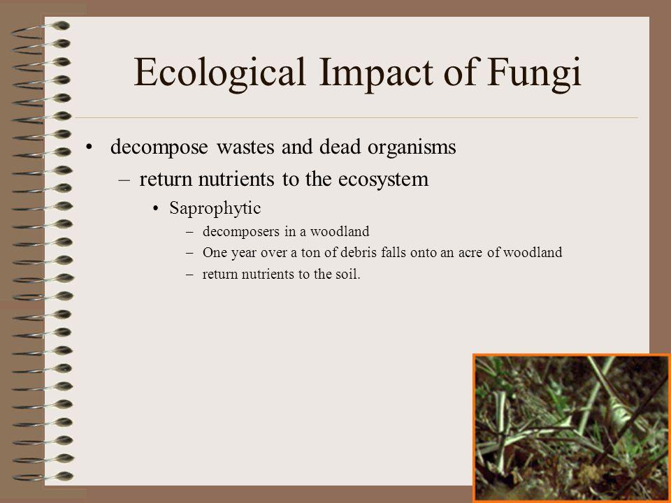 Ecological Impact of Fungi