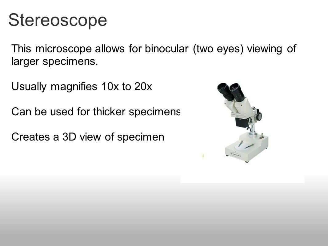 Stereoscope This microscope allows for binocular (two eyes) viewing of larger specimens. Usually magnifies 10x to 20x.
