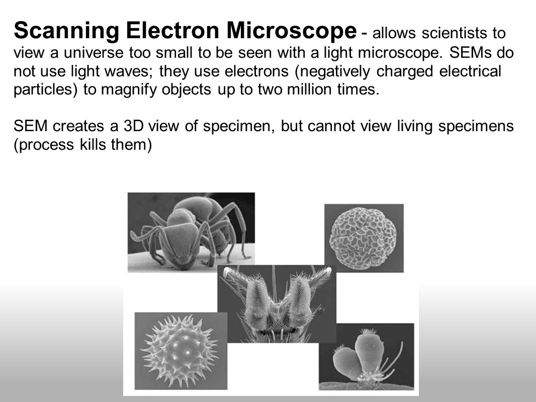 Scanning Electron Microscope - allows scientists to view a universe too small to be seen with a light microscope.