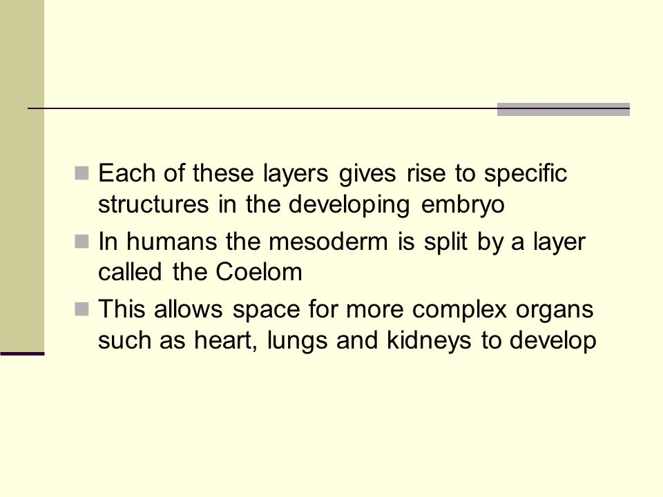 Each of these layers gives rise to specific structures in the developing embryo