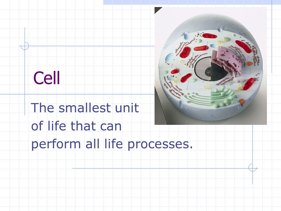 The smallest unit of life that can perform all life processes.