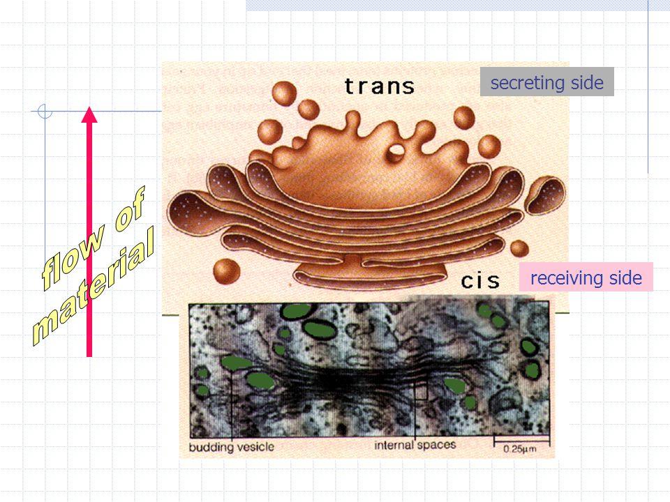 secreting side flow of material receiving side