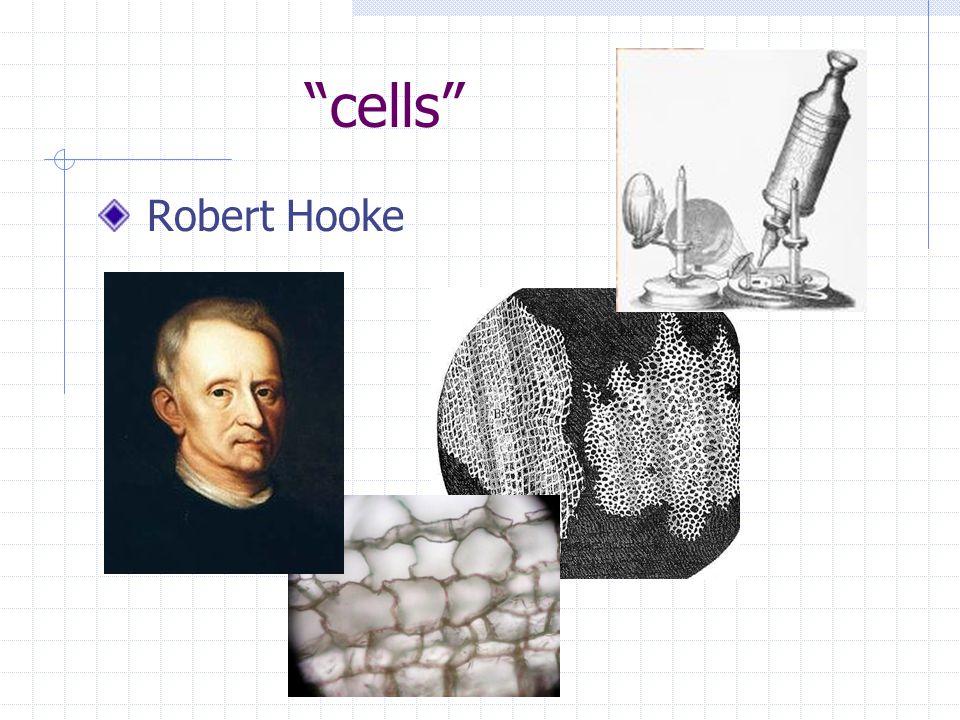 cells Robert Hooke