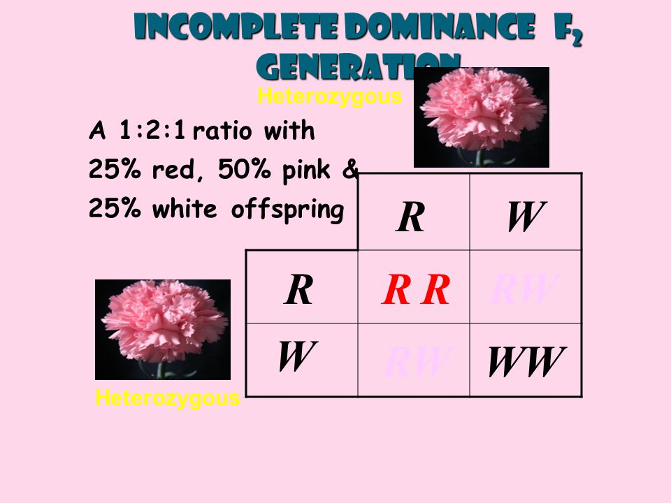 Incomplete Dominance F2 generation