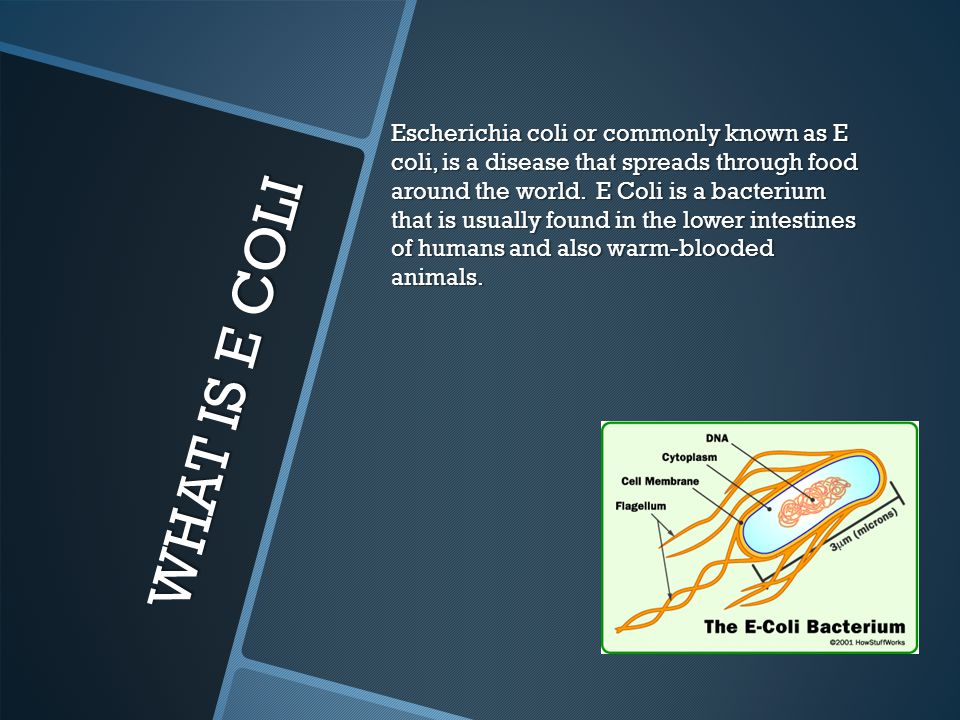 Escherichia coli or commonly known as E coli, is a disease that spreads through food around the world. E Coli is a bacterium that is usually found in the lower intestines of humans and also warm-blooded animals.