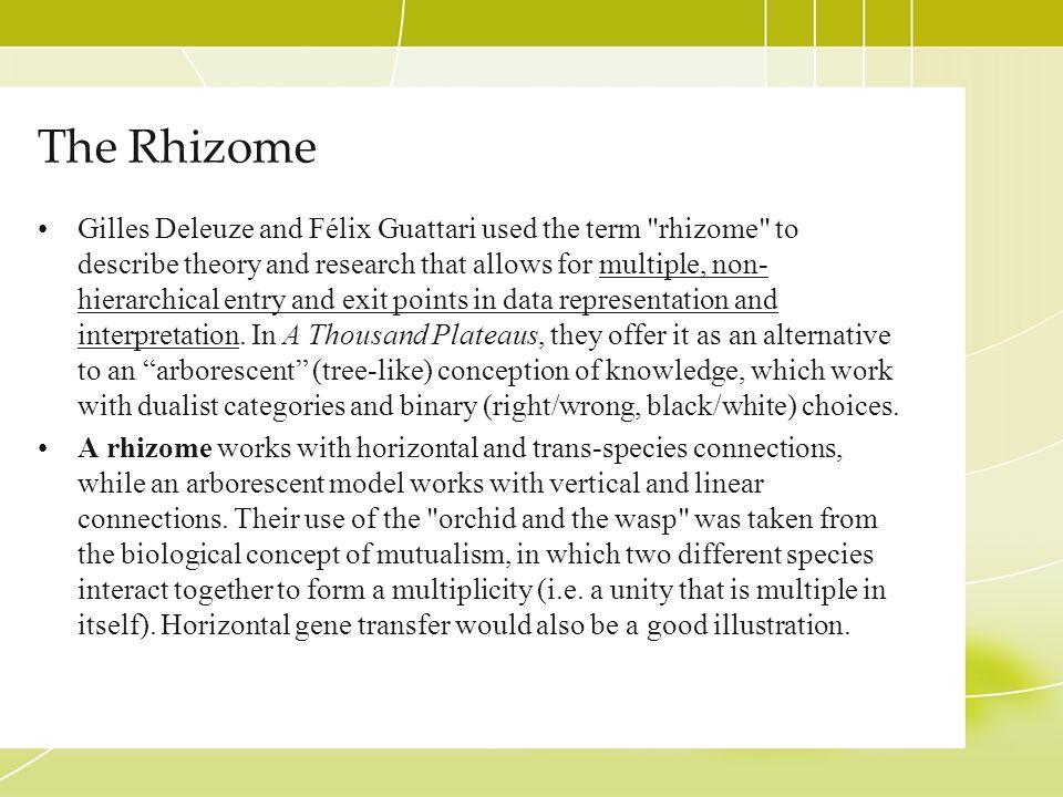 The Rhizome