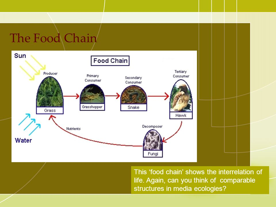 The Food Chain Ecological approach---media system dependency theory (multiple channels/mixed media)