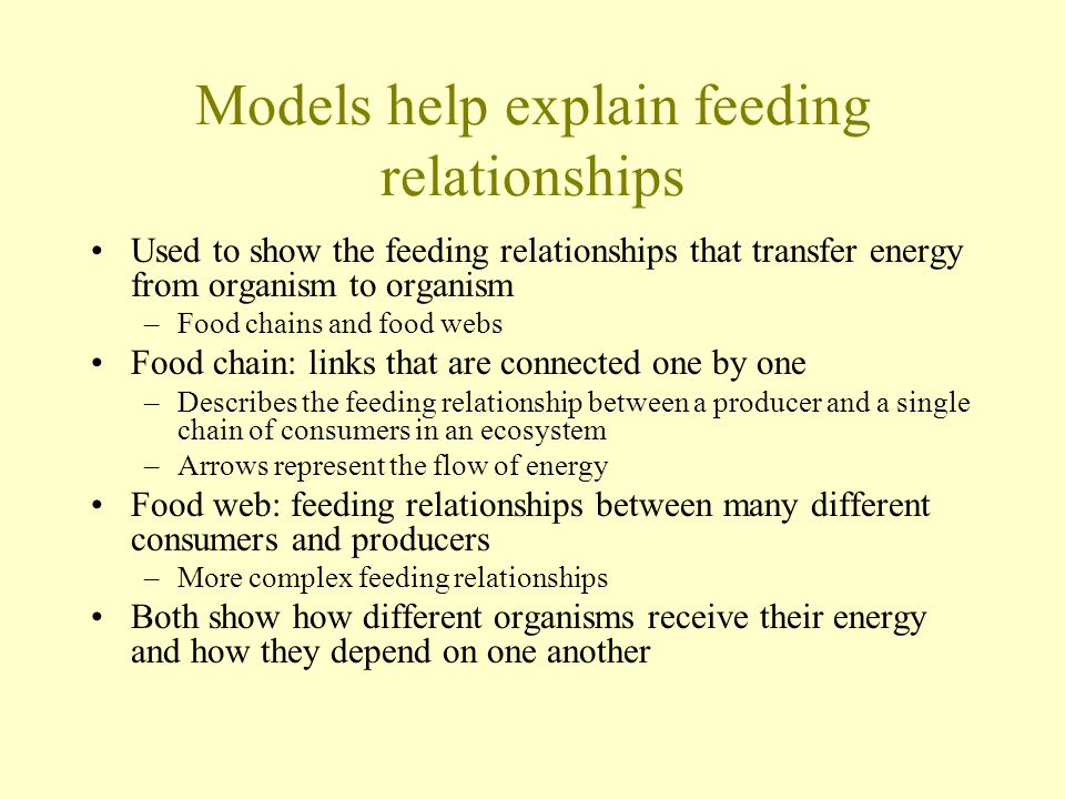 Models help explain feeding relationships