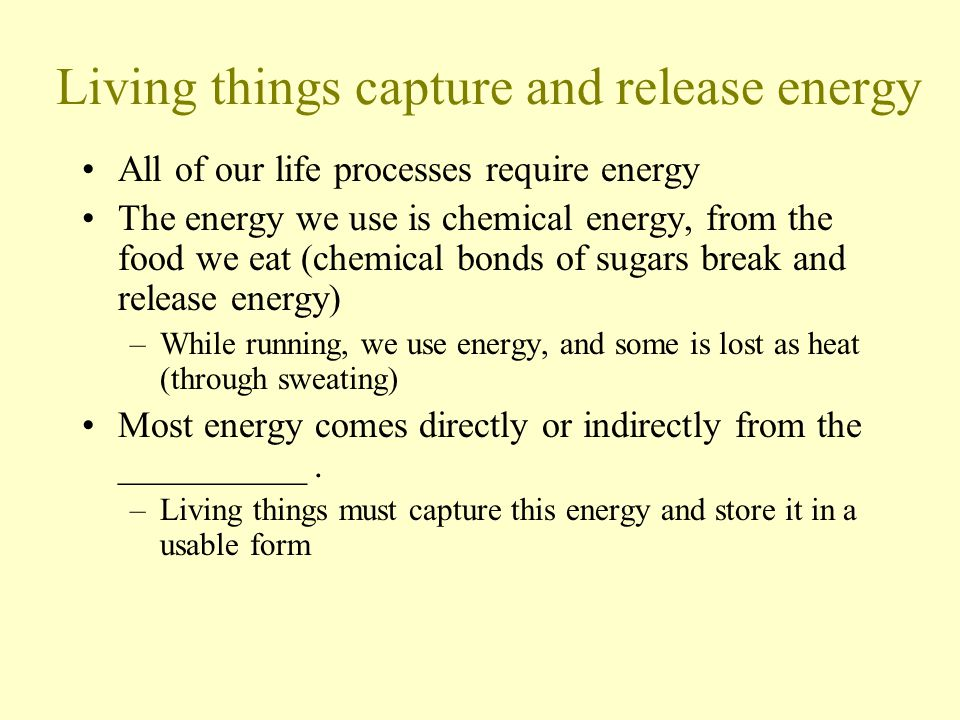 Living things capture and release energy