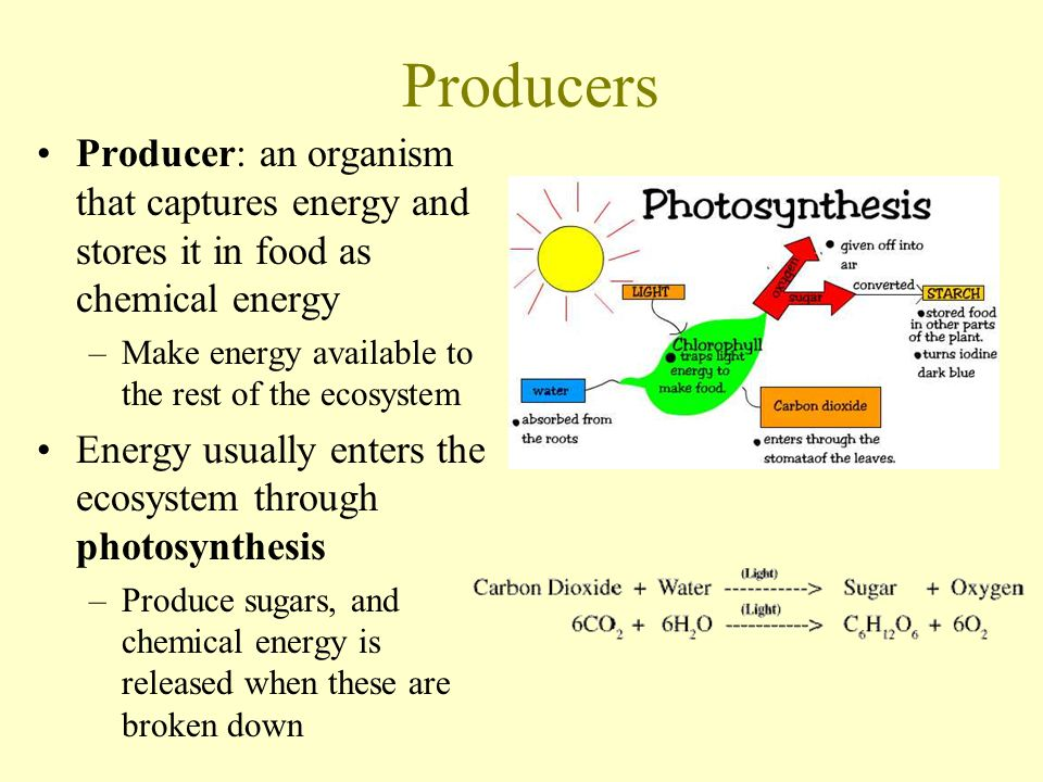 Producers Producer: an organism that captures energy and stores it in food as chemical energy. Make energy available to the rest of the ecosystem.