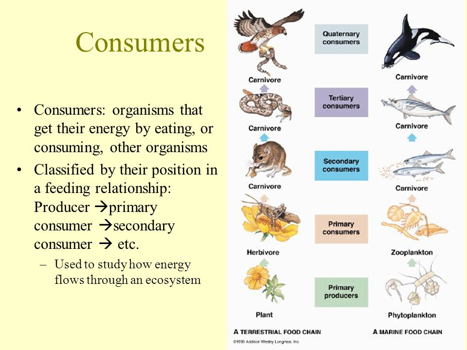 Consumers Consumers: organisms that get their energy by eating, or consuming, other organisms.