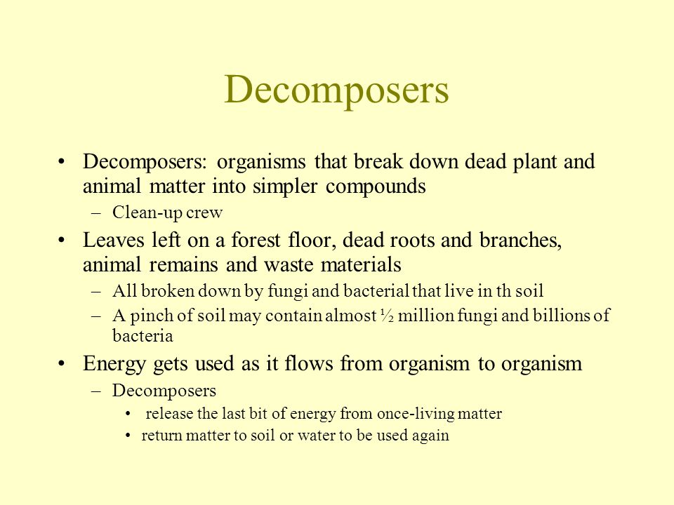 Decomposers Decomposers: organisms that break down dead plant and animal matter into simpler compounds.